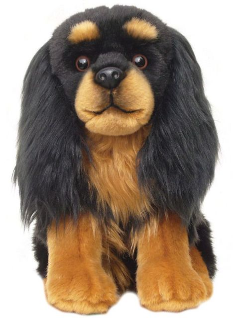 King Charles Cavalier black and  tan, gift wrapped or not, with or without engraved tag